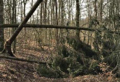 Resilienz und Hochsensibilität – Lösungsorientierung