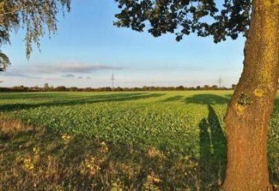 Resilienz und Hochsensibilität – Optimismus