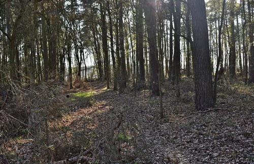 Wegfinden Wald Umwege